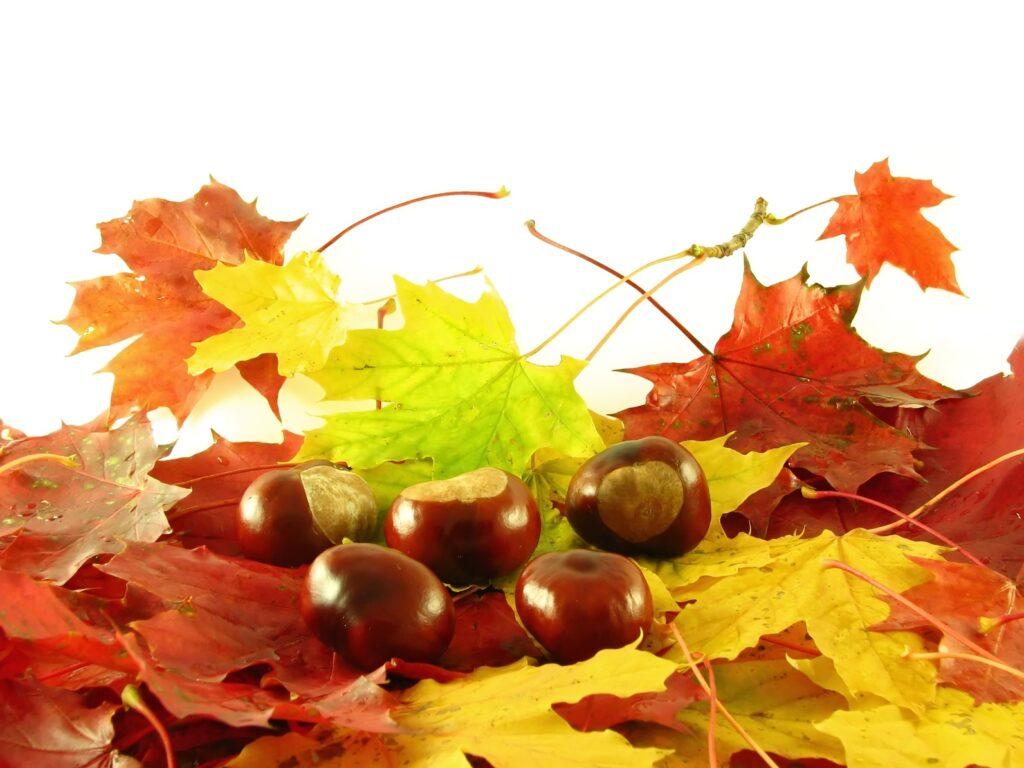 Herbsthaut